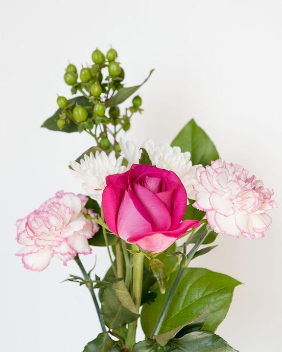 Pink rose flower white background free photo on pixabay pink rose flower white background petal romance mightylinksfo