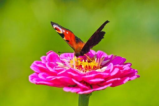 Mariposa De Color Rosa Imágenes Pixabay Descarga Imágenes Gratis