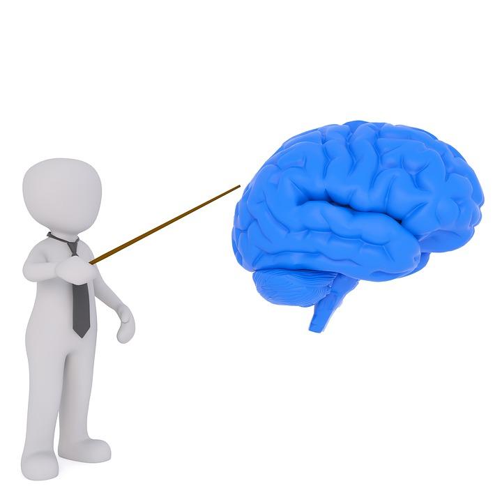 Profesor, Cerebro, Investigaciones Sobre El Cerebro