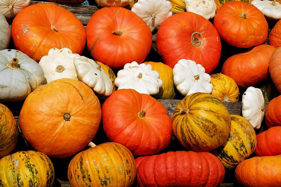 Pumpkins, Decorative Squashes, Colorful, Autumn