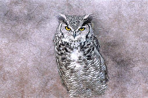 96 Koleksi Gambar Kolase Burung Hantu Dari Kacang Hijau HD