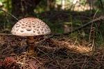 mushroom, kite, mushrooms