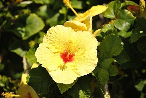 Hawaiian Blume Bilder · Pixabay · Kostenlose Bilder herunterladen