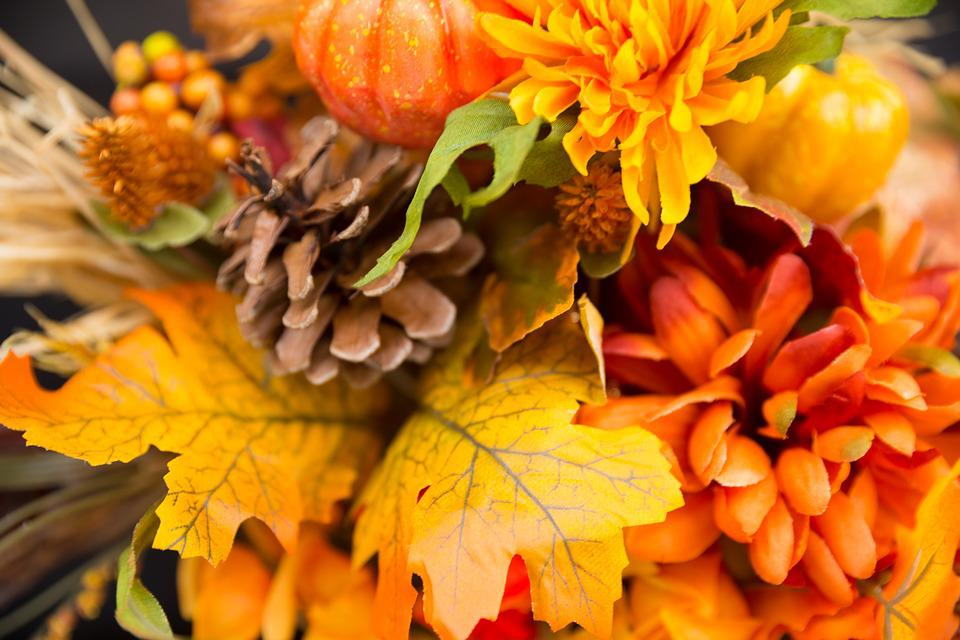 fall flowers thanksgiving free photo on pixabay
