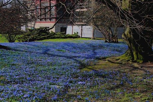 Spring, Flowers, Landscape, Park, Blue