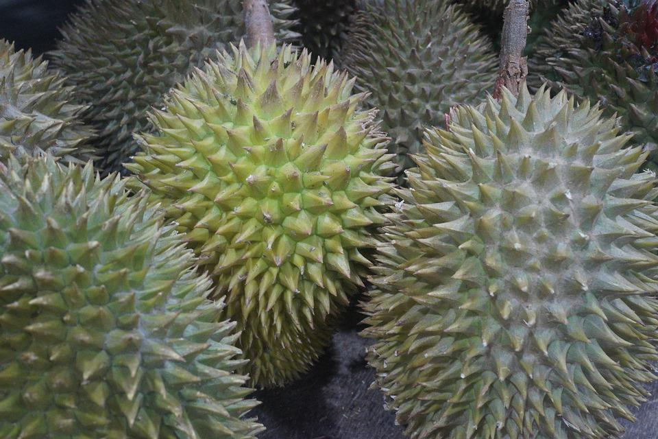 durian fruit king of fruits free photo on pixabay