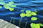 lake, water, surface