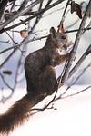 squirrel, nature, malaga