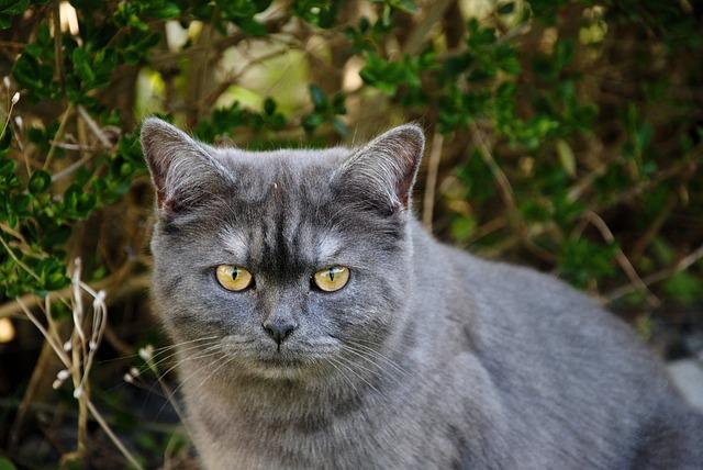 Kucing Alam Abu 183 Free Photo On Pixabay