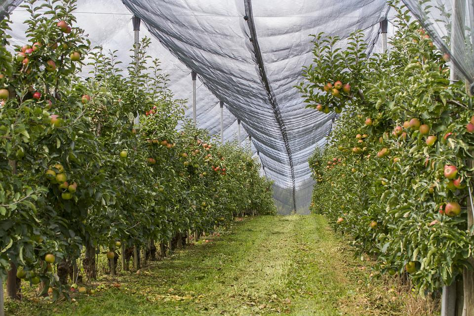 Orchard Hail Net Protection Free Photo On Pixabay