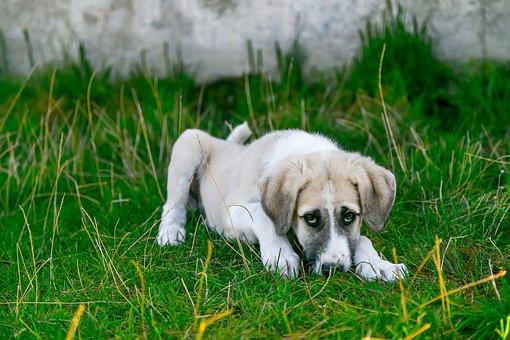 Dog, Stray Dog, Baby Animal, Cute Dog