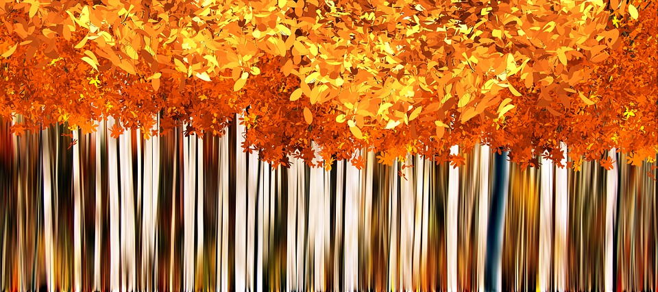 fall autumn background free image on pixabay