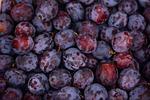 śliwki, owoców, dojrzały