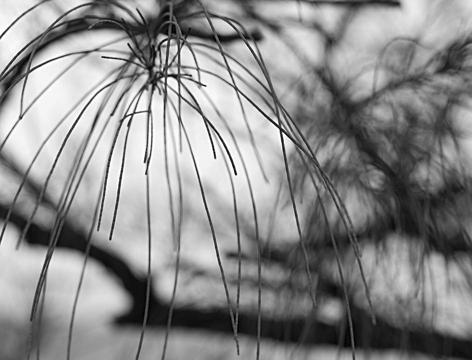 Black And White Monochrome Texture Free Photo On Pixabay