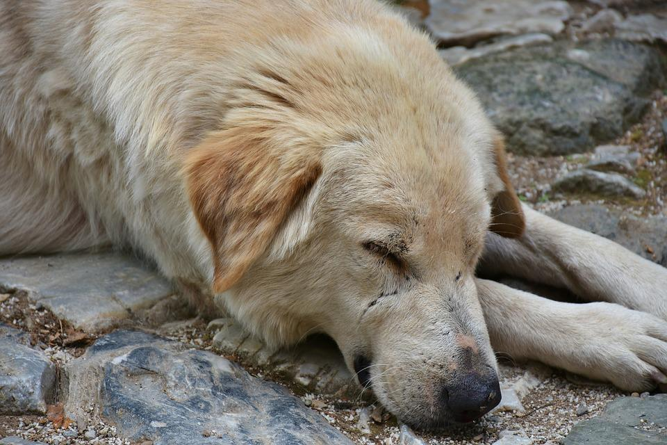 Dog, Street Dog, Portrait, Hybrid, Animal Photography