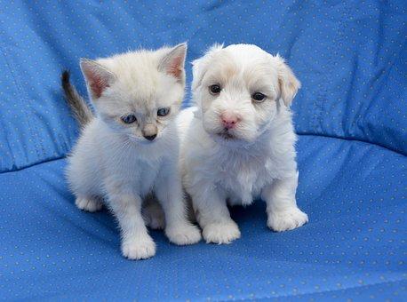 子犬, 子猫, 犬猫, 甘さ, 家畜, 共犯, 自然, 抱擁, 動物, 優しさ
