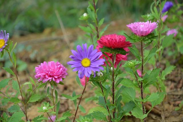 Las flores de la flor plantas foto gratis en pixabay for Plantas para veredas con flores