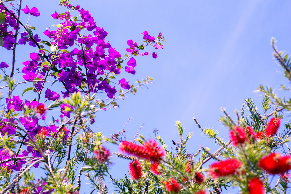 Spring garden flowers free photo on pixabay spring garden flowers flower spring flowers sky mightylinksfo