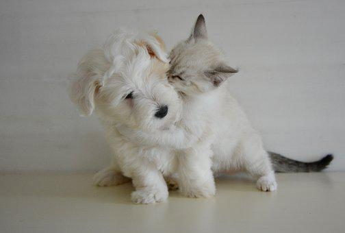 Kiss, Kisses, Puppy Kitten, Dog Cat