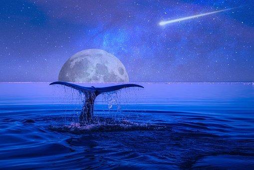 Moon, Stars, Shooting Star, Night, Sky