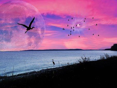 Ocean, Pink Sky, Silhouette, Sunset