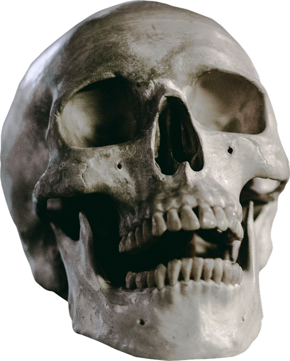 skull skeleton head free photo on pixabay