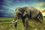 elephant, nature, tour