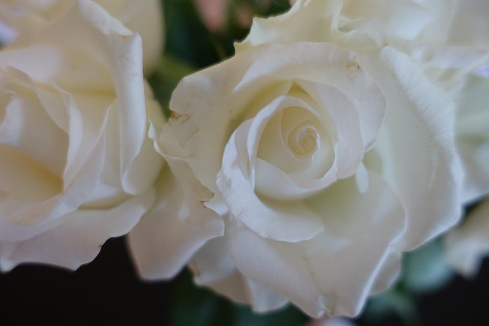 White Rose Wedding Love Anniversary Engagement
