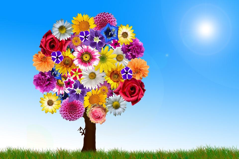 Flores árbol Armonía Foto Gratis En Pixabay