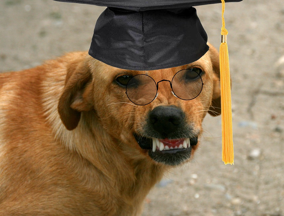 Graduation Images · Pixabay · Download Free Pictures