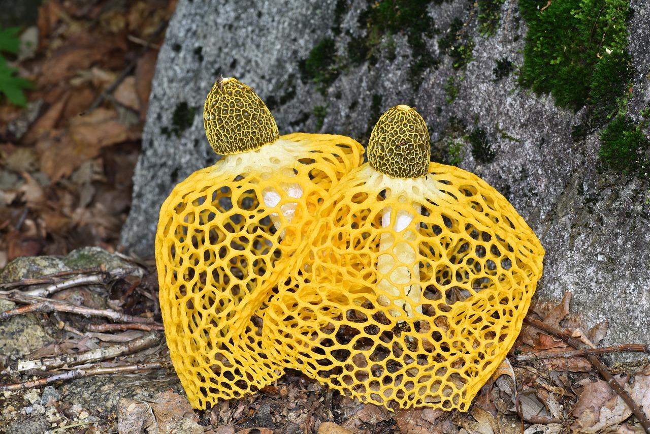 картинки бамбуковый гриб ворота красноярске, купить