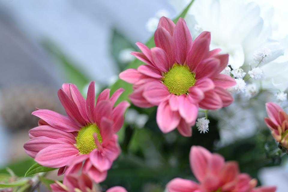 Little pink flowers free photo on pixabay little pink flowers cute sweet wedding green mightylinksfo
