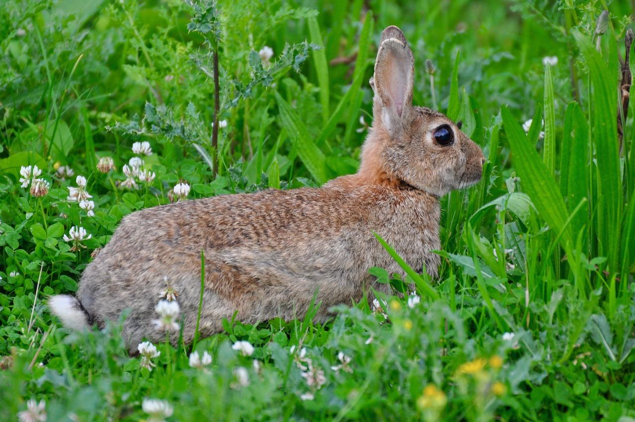 майского жука фотографии кроликов и зайцев водозабора