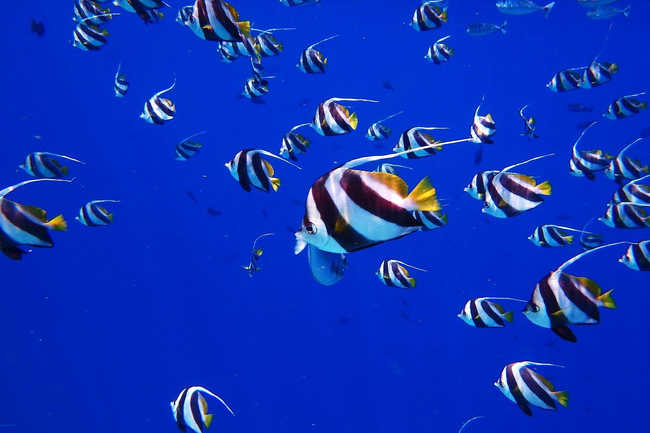 梦见好多很长的鱼 女人梦见好多长鱼