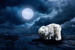 polar bear, young animal, moon
