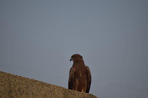 Μεγαλύτερο μαύρο πουλί στο μουνί