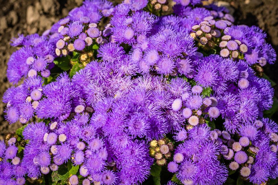 Purple Flowers Blossom Summer Uk Bloom Feel Good
