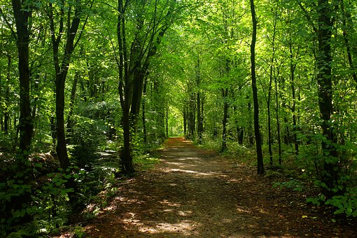 Forest, Trees, Forest Path, Lighting