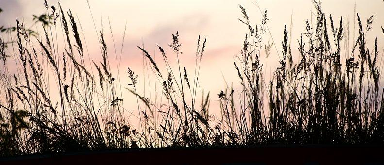 Sunset, Contour, Ombre, Prairie, Soir