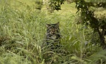 cat, grass, bush