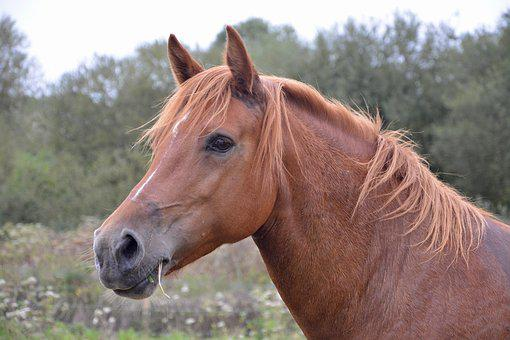 Horse Mare, Next To Horse, Brown Eyes