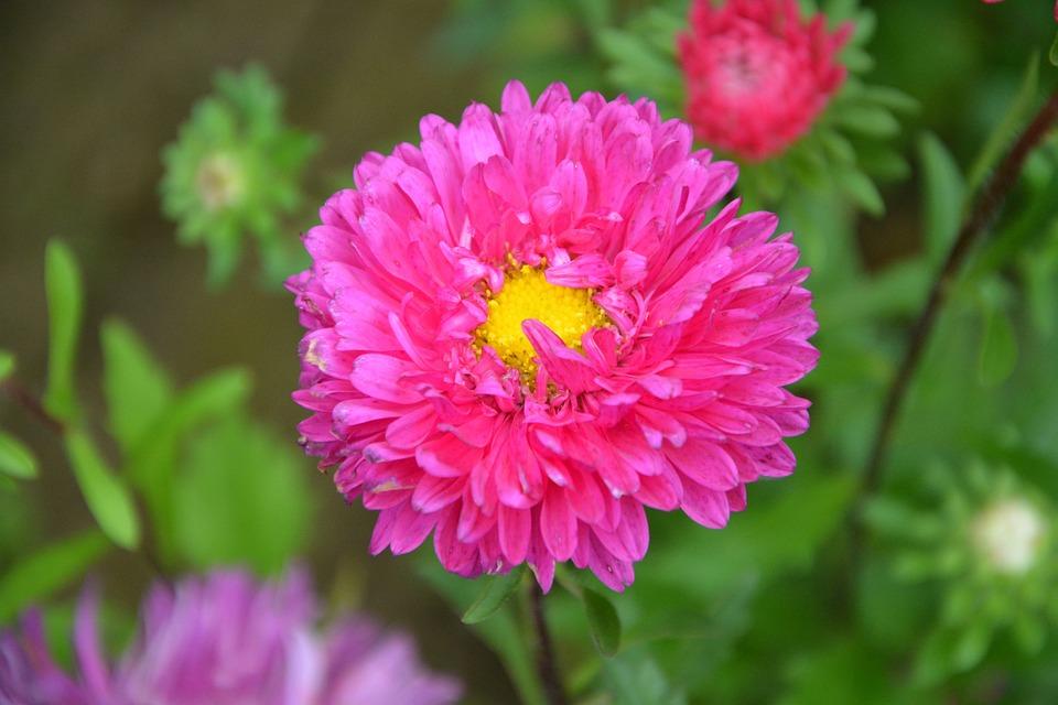 Foto gratis: Flor, Flores De Cerejeira - Imagem gratis no Pixabay ...