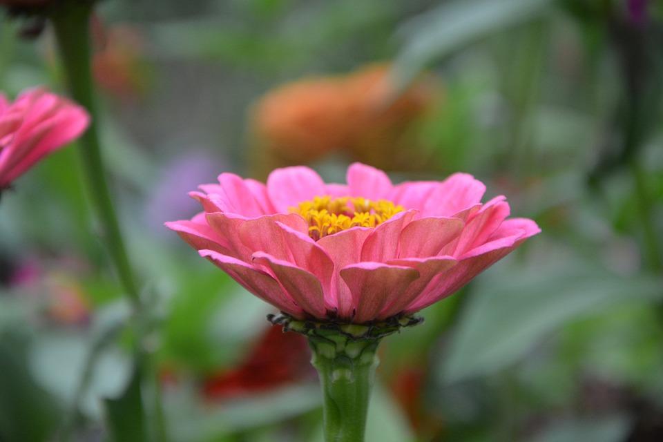 Fiore rosa fiori pianta foto gratis su pixabay