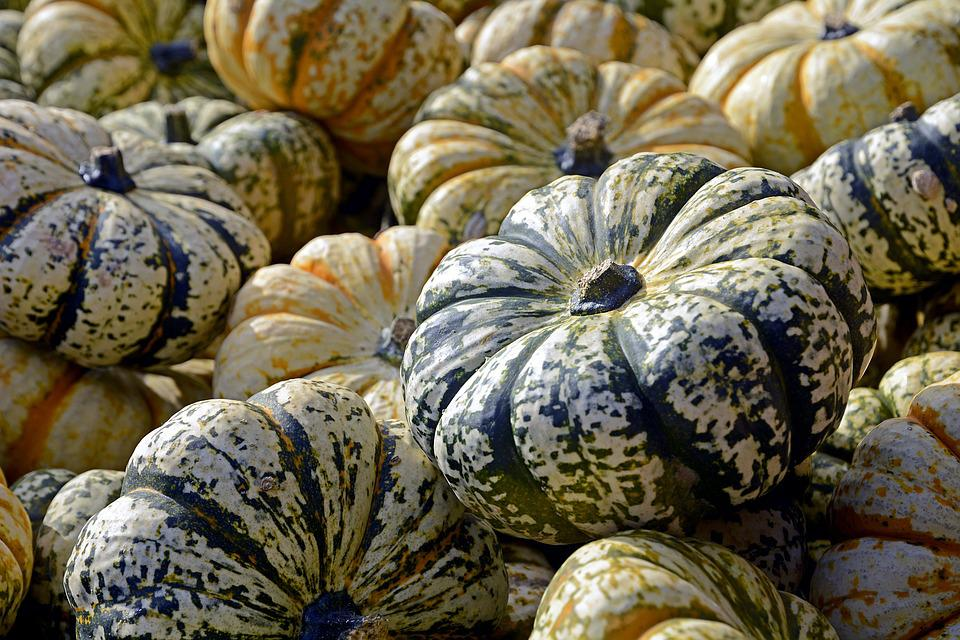 Pumpkin, Gourd, Vegetables, Autumn, Thanksgiving