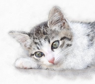 Cat, Animal, Furry, Cute, Closeup