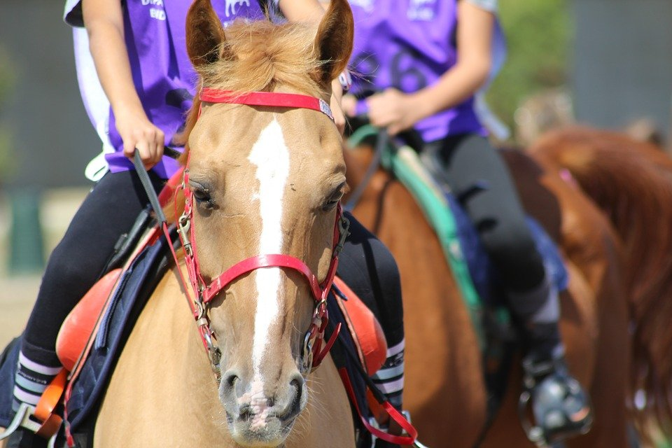 Horse Riding, Endurance, Pony