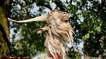 goat, large, horns