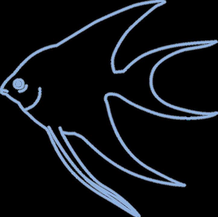 95+ Gambar Gambar Ikan Sederhana Terlihat Keren