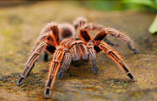 Spider, Creepy, Scary, Arachnid, Fear