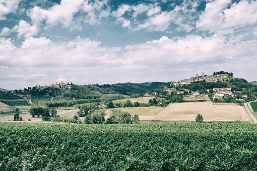 Wein, Weingut, Trauben, Hügel, Jahrgang